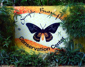 Butterfly Conservation at Bilar image
